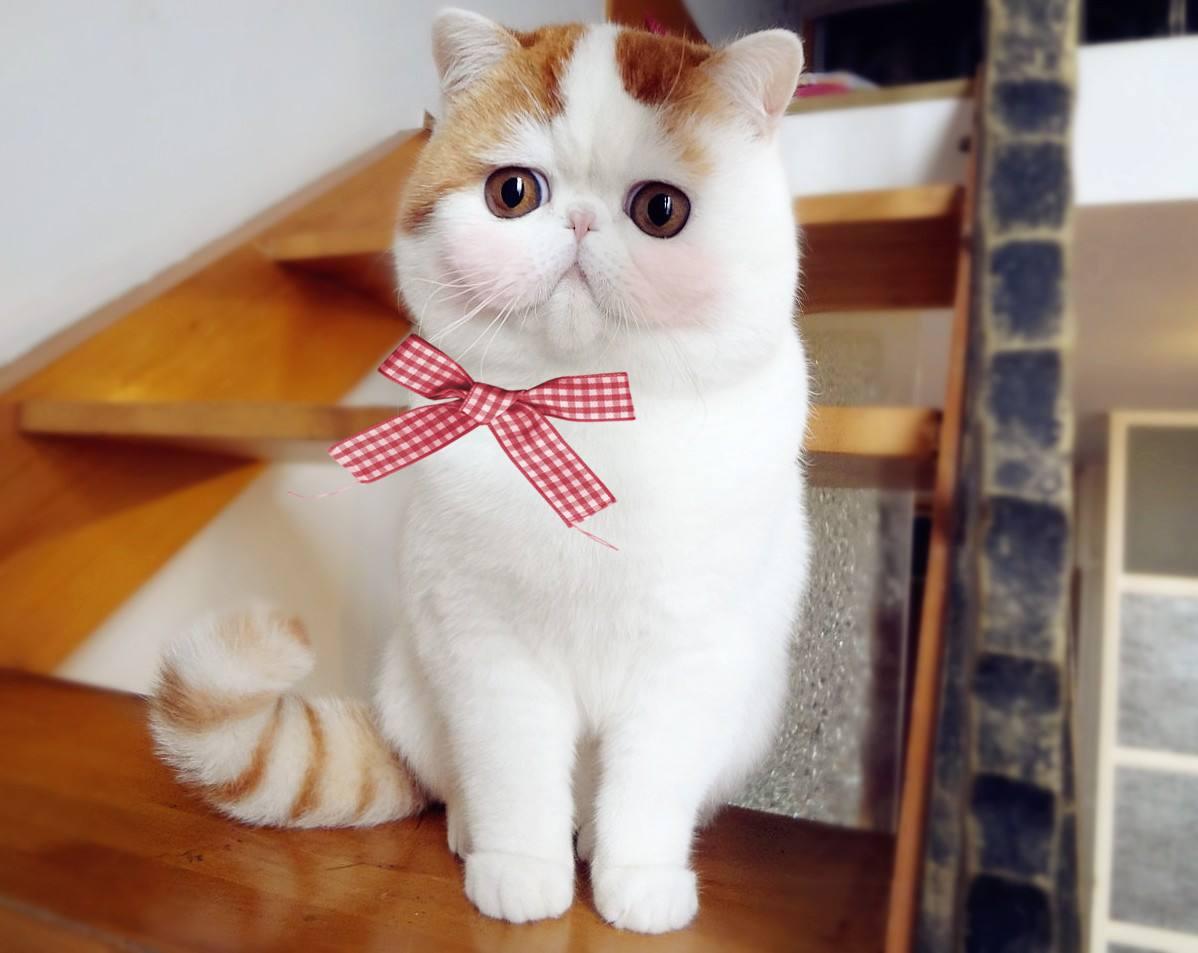 猫咪体内驱虫和体外驱虫周期